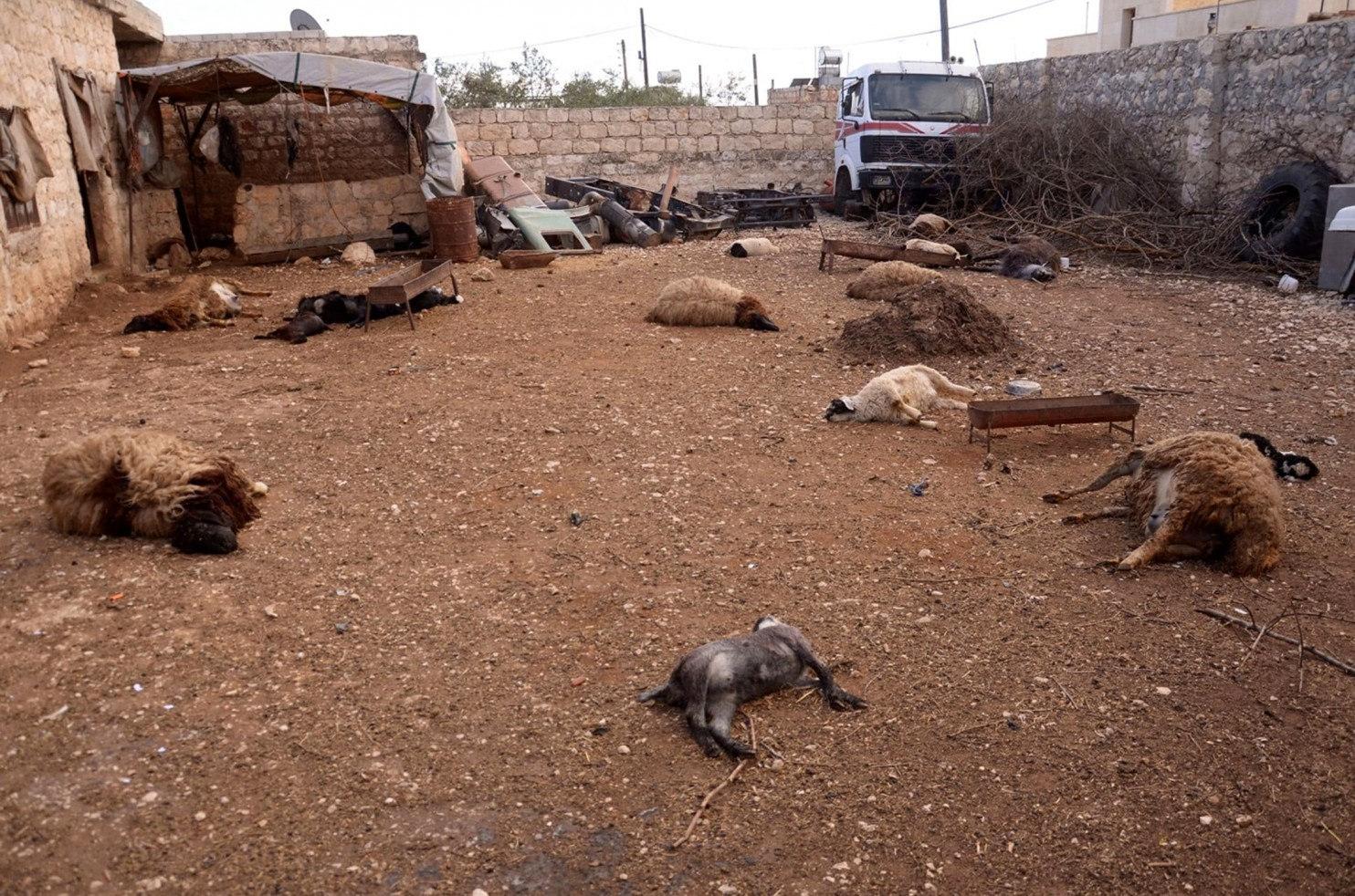 File:Aleppo dead animals March 2013.jpg