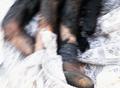 Homs Abel legs.png