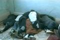 Homs Deir Baalba 12 4 3.png
