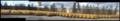 Chlorine Yellow Barrels Panoramic.png