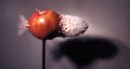 Bullet Through Apple by Harold Edgerton.jpg