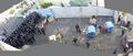 Odessa Clashes Zhukova Pan.png