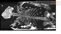 MH17 pilot X-ray.jpg