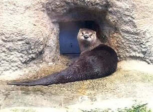 File:Otter2.jpeg