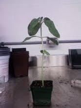 File:Plant 1.jpg
