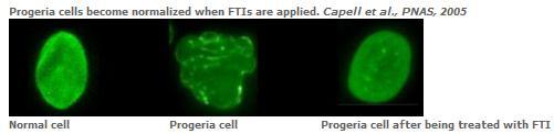 Prgeria cells.jpg