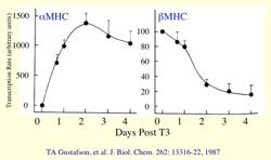 BasicPlotGraph.png