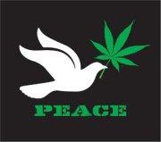 File:Cannabis dove peace.jpg