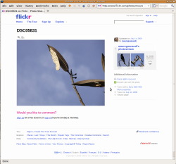 Screenshot flickr.png