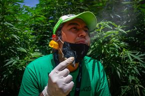 Mexico City marijuana garden next to Senate.jpg