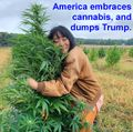 America embraces cannabis, and dumps Trump.jpg