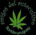 Florida Uruguay.jpg