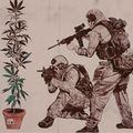 SWAT and cannabis plant.jpg