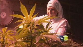 Merced cannabis nun.jpg