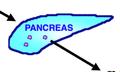 PancreasGraphic.png