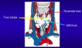 AnatomyExplanationSketch.png