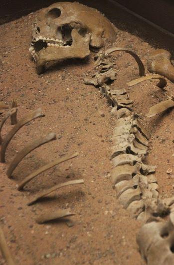 File:Bonesinwell.jpg