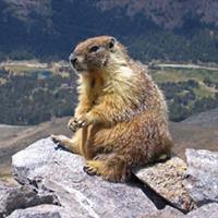 Marmot-edit1.jpg