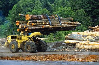 File:Mitronan Logging.jpg