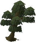 Willow tree.png