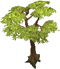 Normal tree.png