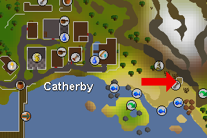 Catherby ita hedelma.png
