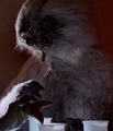 Muftak-ANH.png