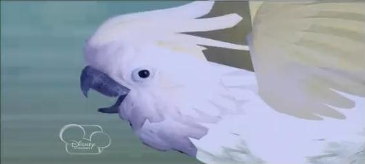 File:Bird.JPEG