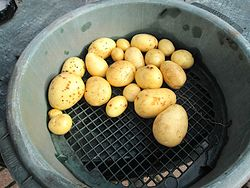 Vivaldi Potato Variety.jpg