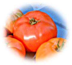 Tomato Brandywine.jpg