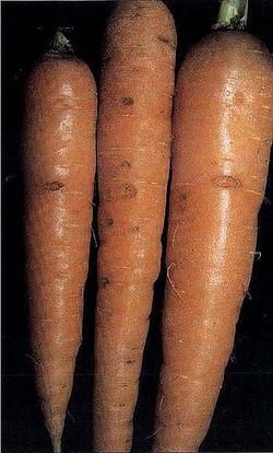 Carrot Cavity Spot.jpg