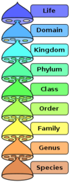 Biological classification.png