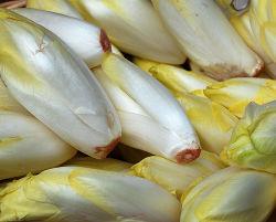 Chicory-1-.jpg