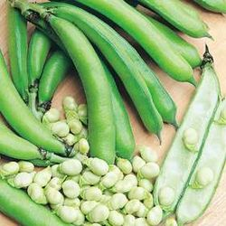 Broad Bean.jpg
