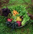 Vegetable Selection.jpg