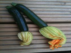 Zucchini Courgette Fruit Flowers.jpg
