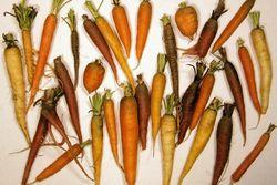 CarrotDiversityLg-1-.jpg