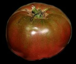 Tomato Cherokee Purple Fruit.jpg