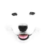 SamoyedOrb.png