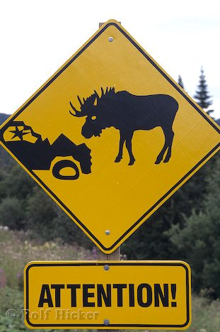 File:Moose Sign.jpg
