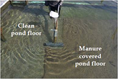 Dynamic Fish Pond Cleaning System Mindworks