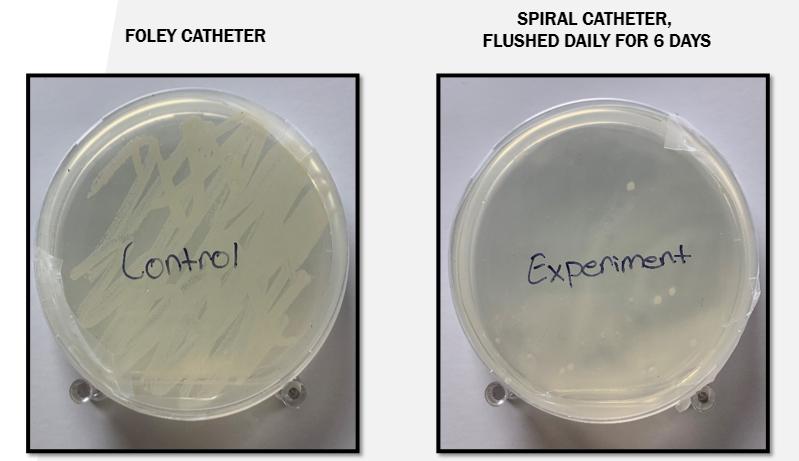 2018 IPUC Bacteria.PNG