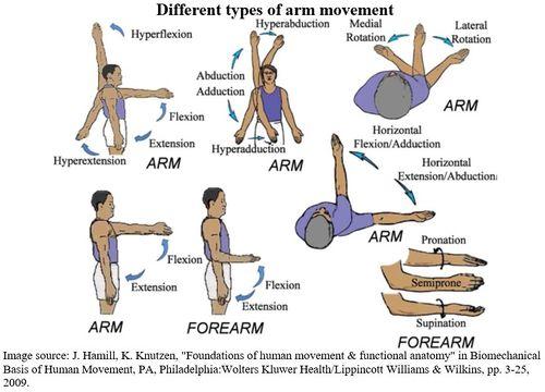 ArmMovementPicture.JPG