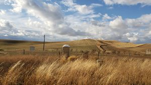 Sheep farm.jpg