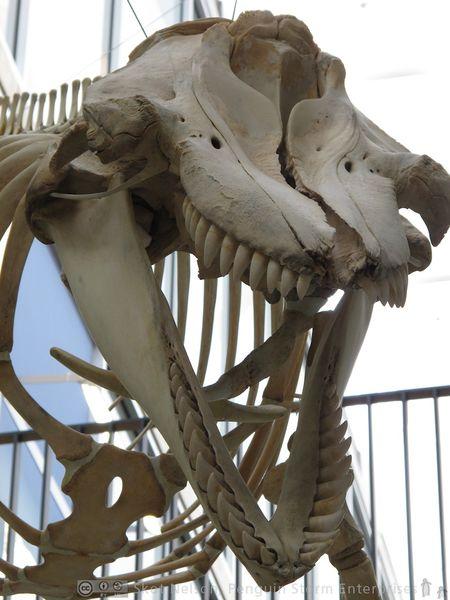 File:BeatyBiodiversityMuseum 8.jpg