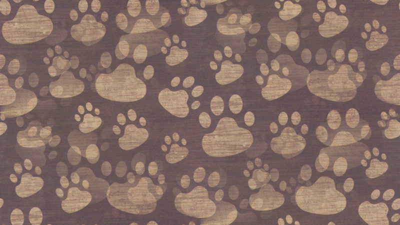 File:Paw print background surface pattern 69479 2048x1152.jpg