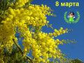 Mimosa-Nityanica.JPG