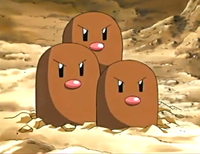 William's Dugtrio