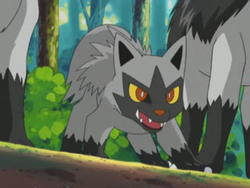 Poochyena Cackle.png