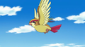 Changi's Pidgeot.png